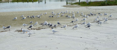 Bird and beach Royalty Free Stock Images