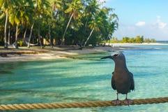 Bird in a beach in Tikehau. Tahiti stock photography