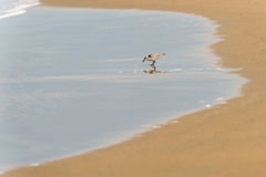 The bird on the beach. Royalty Free Stock Photo