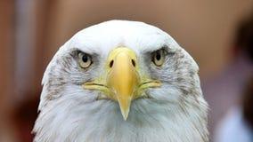 Bird, Beak, Bird Of Prey, Eagle royalty free stock photography