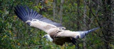 Bird, Beak, Ecosystem, Fauna Royalty Free Stock Photos