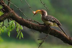 Bird, Beak, Ecosystem, Hornbill Stock Photo