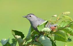 Bird, Beak, Fauna, Branch royalty free stock photo