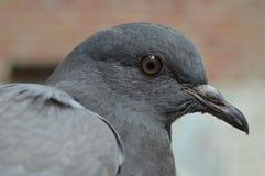 Bird, Beak, Fauna, Close Up Royalty Free Stock Photo