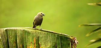 Bird, Beak, Fauna, Ecosystem Stock Photography
