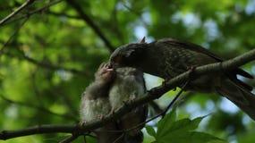 Bird, Beak, Fauna, Ecosystem