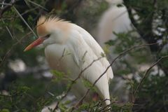 Bird, Beak, Fauna, Egret Stock Image