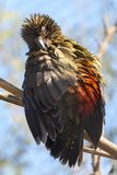Bird, Beak, Fauna, Feather Royalty Free Stock Image