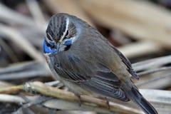 Bird, Beak, Fauna, Feather stock images