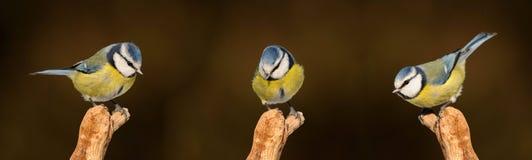 Bird, Beak, Fauna, Finch stock image