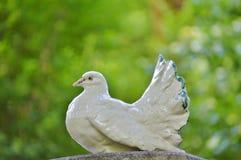 Bird, Beak, Fauna, Grass Stock Images
