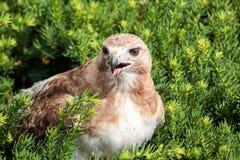 Bird, Beak, Fauna, Grass Royalty Free Stock Image