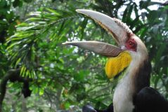 Bird, Beak, Fauna, Hornbill stock photo