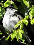 Bird, Beak, Fauna, Leaf Royalty Free Stock Photo