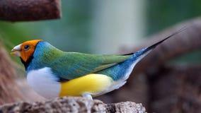 Bird, Beak, Fauna, Organism Royalty Free Stock Images