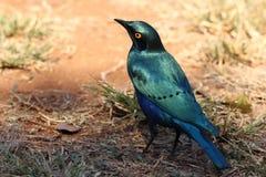 Bird, Beak, Fauna, Organism Stock Images