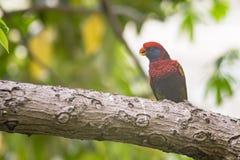 Bird, Beak, Fauna, Organism Royalty Free Stock Image