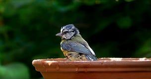 Bird, Beak, Fauna, Perching Bird Royalty Free Stock Image