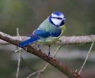 Bird, Beak, Fauna, Perching Bird Royalty Free Stock Photos