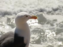 Bird, Beak, Gull, Seabird stock photography