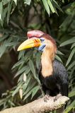 Bird, Beak, Hornbill, Fauna Royalty Free Stock Photo