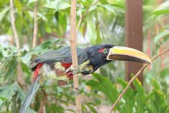 Bird, Beak, Hornbill, Fauna Stock Image