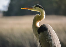 Bird Beautiful Stock Images