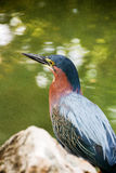 Bird. Beautiful little bird near the lake Stock Photos