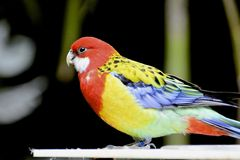 Bird. Beautiful multi color bird with blurred background Royalty Free Stock Image