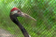 The bird behind bars Royalty Free Stock Image