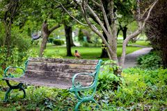 Bird sitting on a bench in a park
