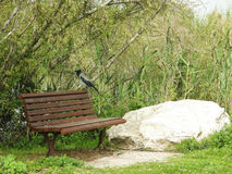 Bird and bench. Relax in nature Royalty Free Stock Photography
