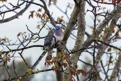 Bird on the bench - Tuscany, Italy Stock Image