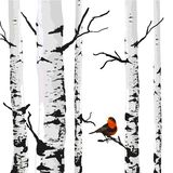 Bird of birches. Vector drawing with editable elements Royalty Free Stock Images