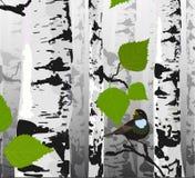 Bird of birches Royalty Free Stock Photo