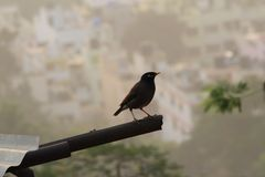 Bird Obsession !. Bird with background of buildings royalty free stock photo
