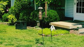 Bird on bird feeder in front yard Royalty Free Stock Photography