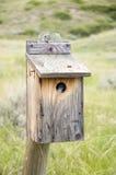Bird in bird house. Small bird peeking from inside a wooden bird house Royalty Free Stock Photos