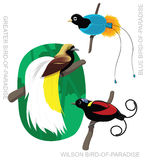Bird Bird-of-Paradise Set Cartoon Vector Illustration Royalty Free Stock Photography
