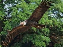 Bird, Bird Of Prey, Eagle, Fauna royalty free stock images