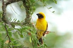 Bird and bird's nest Stock Photography