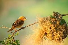 Bird and bird`s nest. On the tree stock photo