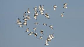 Bird, Bird of Thailand, Migration birds Stock Photos
