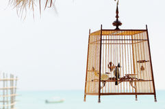 Bird in birdcage Stock Photo