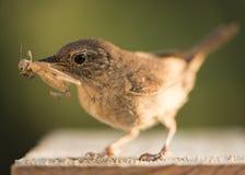Bird on birdhouse Royalty Free Stock Photos
