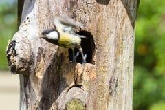 Bird and birdhouse Royalty Free Stock Photo