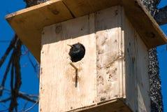 Bird in a birdhouse Stock Photo