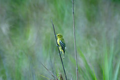 Bird. S (class Aves or clade Avialae) are feathered, winged, two-legged, warm-blooded, egg-laying vertebrates. Aves ranks as the tetrapod class with the most Stock Images