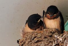 The bird Royalty Free Stock Photography