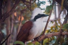 Bird. Black hornbill, animal, birdphotography, forest stock photo